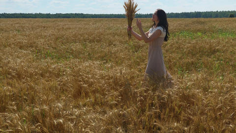 Long-haired oman walks with wheat ears bouquet on a golden field Footage