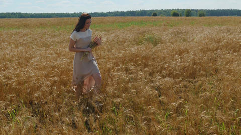 Dark-haired woman walks with bounch of wheat ears on a golden field Footage