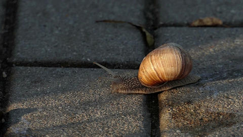 A awkward snail creeps on a concrete surface in summer in slow motion Live Action