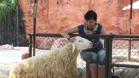 video of a smiling woman caressing sheep Footage