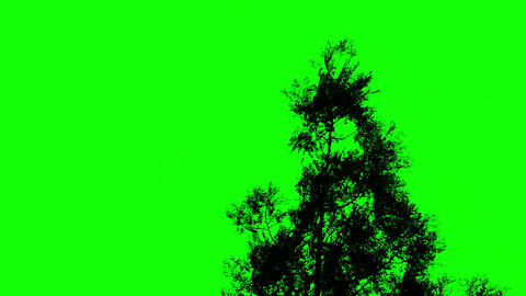 Tree against a green screen, chromakey Live Action