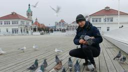Man is feeding birds on a pier Footage