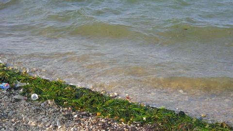 waves splashing on sandy beach in windy weather bringing sea grass in Footage