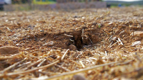 Still shot of ants carrying all kinds of suff into ant nest hole. Shot in Live Action