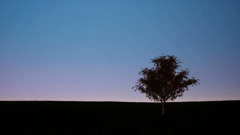 Silhouette of single tree on dusk sky Footage