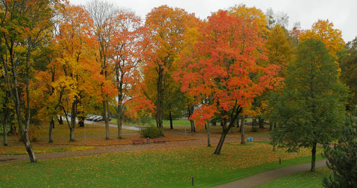 Leaf fall in the autumn city park Footage