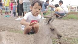Kangaroo child Footage
