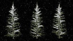 Pine Trees Under The Snowfall 画像
