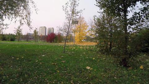 16 rodbot autumn Image