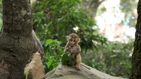 Monkey cub in the jungle Footage