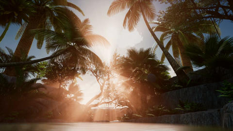 4K Sunset beams through Palm Trees at jungle rainforest Footage