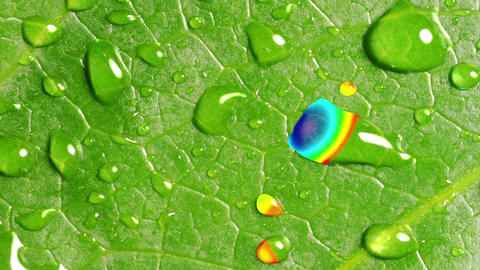 Rainbow Reflected In Droplets On The Green Leaf GIF
