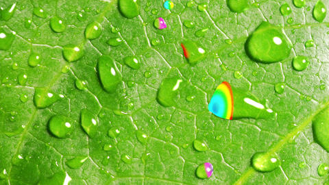 Rainbow Reflected In Droplets Of Rain On The Green Leaf Animation
