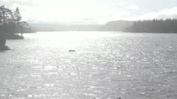 Sunny rain on the lake Footage