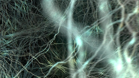[alt video] Active Nerve Cell In Human Neural System