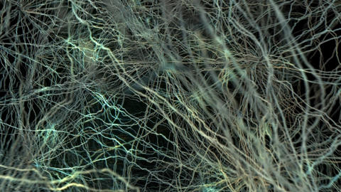 Active Nerve Cell In Human Neural System stock footage