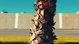 Slow Panoramic View Of A Small Palm Tree On A Sunny Day, From The Roots To The T stock footage