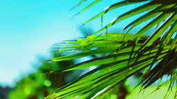 Palm leaf sways in the wind on a bright sunny summer day Footage