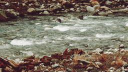 Panning view of fast-flowing mountain river in winter, Caucasus, Sochi Footage