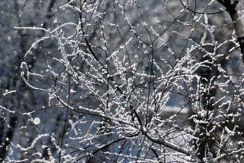 Branches covered by hoarfrost Photo