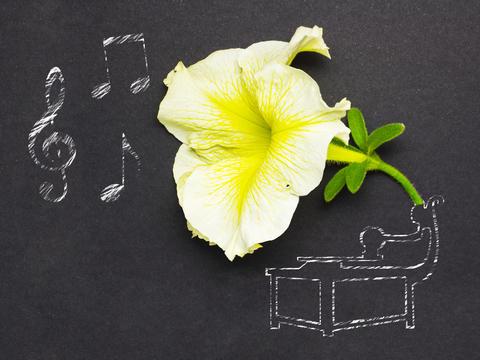Beauty of music フォト