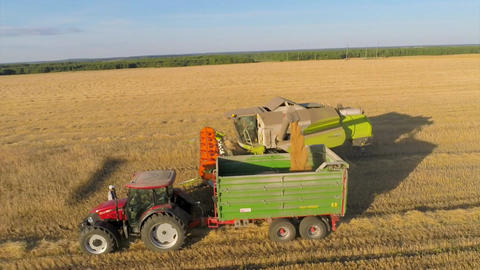 Combine loading grain into a tractor in a wheat field ビデオ