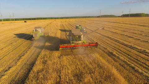 Two combine and the tractor are doing work harvesting in a wheat field ビデオ