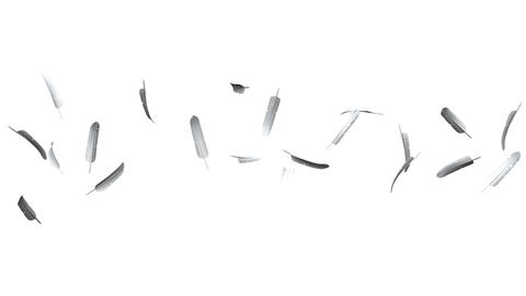 White Feathers On White Background CG動画