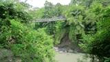 wooden bridge in jungle Footage