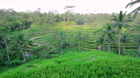 Tegalalang rice terrace, bali, indonesia Footage