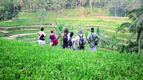 tourists in rice terrace, bali Stock Video Footage