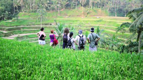 tourists in rice terrace, bali Footage