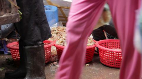 prawns on ground unhygienic Stock Video Footage
