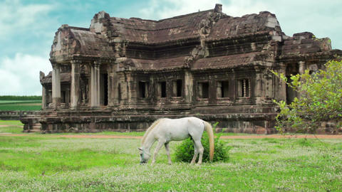 Horse rental in Angkor Wat, retouched Stock Video Footage