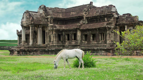 Horse rental in Angkor Wat, retouched Footage