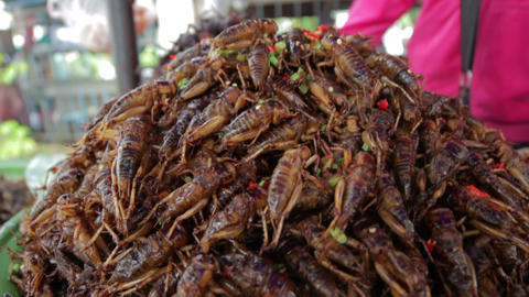 notorious bug eating of asia Stock Video Footage