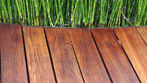 Video of wooden plank seat texture and green plant on the back, abstract modern  Footage