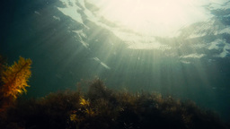 Underwater flora with sun rays shining on the water surface Stock Video Footage