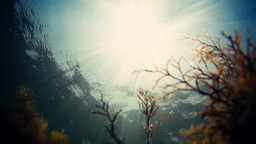 Video - Sun and blue sky reflects below the water surface with sun rays enter th Footage