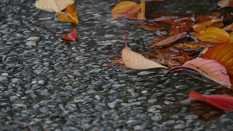 Slow motion view of raindrops collecting over autumn leaves Footage