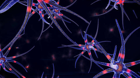 Neurons and Impulses Moving Them Animation