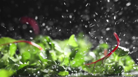 Fresh greens falls with splash in slow motion, food in super slow motion, high Live Action