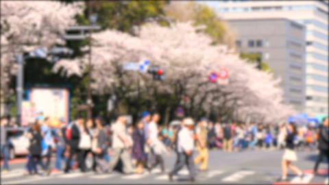 Defocused image of crowd attending the spring cherry blossom festival at Yasukun Footage