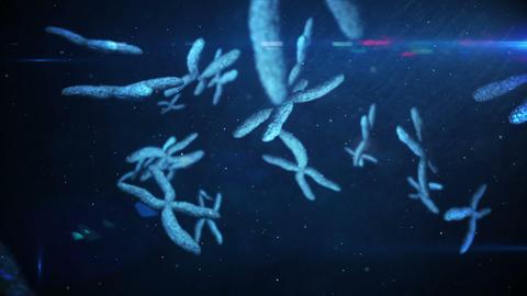 Animation of moving chromosomes Animation
