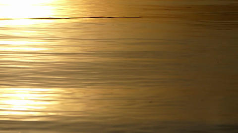 The golden looking waters of a lake at a splendid sunset Footage