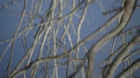 Birds flying from tree water reflection Footage