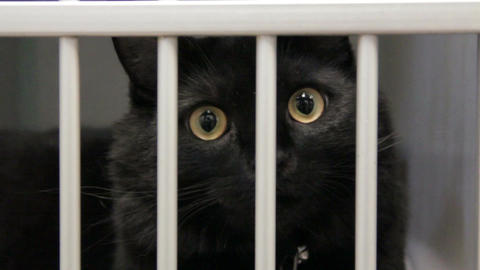 Black cat behind bars Live Action