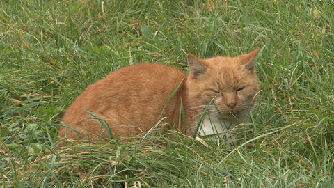 Cat in grass Footage