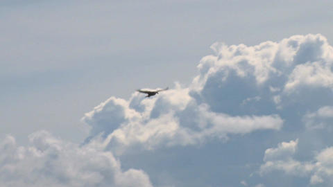 Bald eagle soaring against clouds Live Action