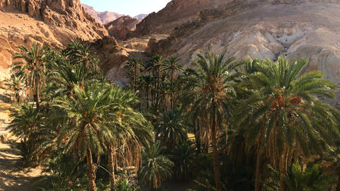 Beautiful Landscape Of Oasis In Africa. Palm Trees Plant In Sahara. 4K Video ビデオ